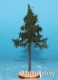 Freon SWP3 (BACKORDER) - High-growing spruce (8 -12 cm)